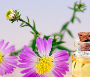Naturopathie : des clefs de santé pour vos salariés